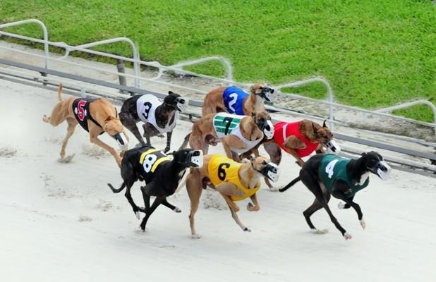 Article image for: AND THEY'RE OFF! CIRCUIT RETURNS TO PALM BEACH KENNEL CLUB THURSDAY