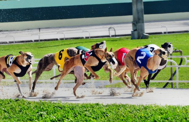 DAY 4 OF THE PALM BEACH KENNEL CLUB CIRCUIT